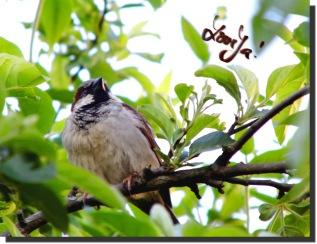 Love Ya - birdie
