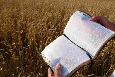 resizedimage387259-bible-in-harvest-field-web